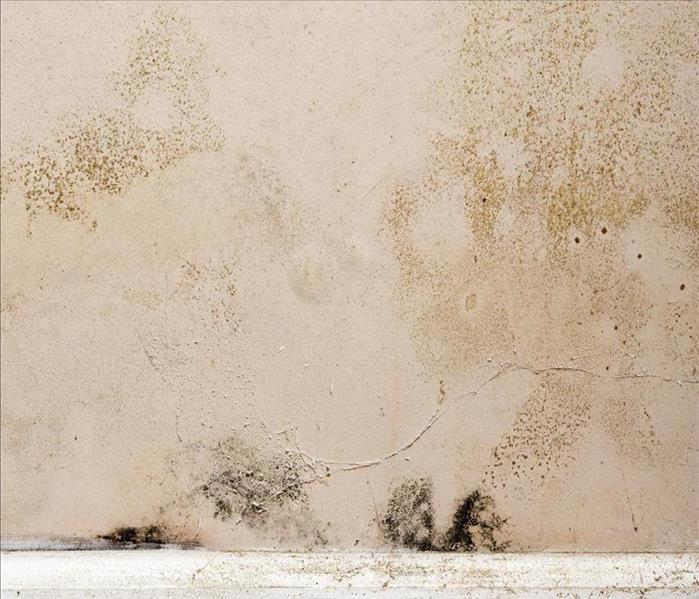 Mold Remediation Get Mold Damage In Your Cumming Home Under Control Today