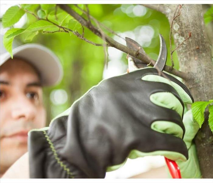 Close-up of a professional gardener pruning a tree