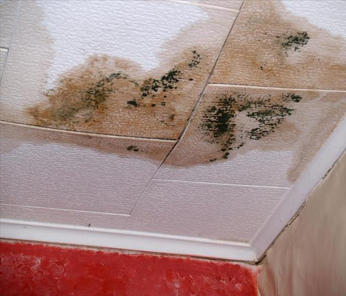 ceiling with black mold growth