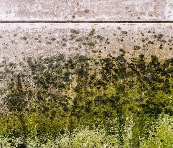 Mold Remediation Are Your Commercial Building's Air Ducts Growing Mold? 3 Ways To Know for Sure